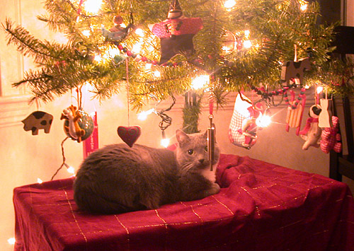 sammie under the tree
